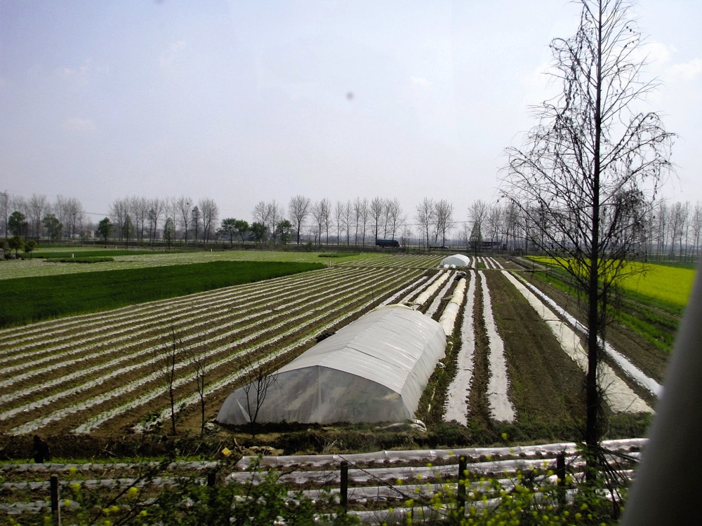 Every available square inch of soil in China is being farmed to maximize its output, whether that's a vacant lot in a city or, as here, farmland growing multiple crops a year with plastic.