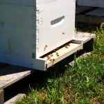 Even hive management may contribute to bee loss, although this too gets overlooked in many attacks on farmers' use of neonic seed treatments.