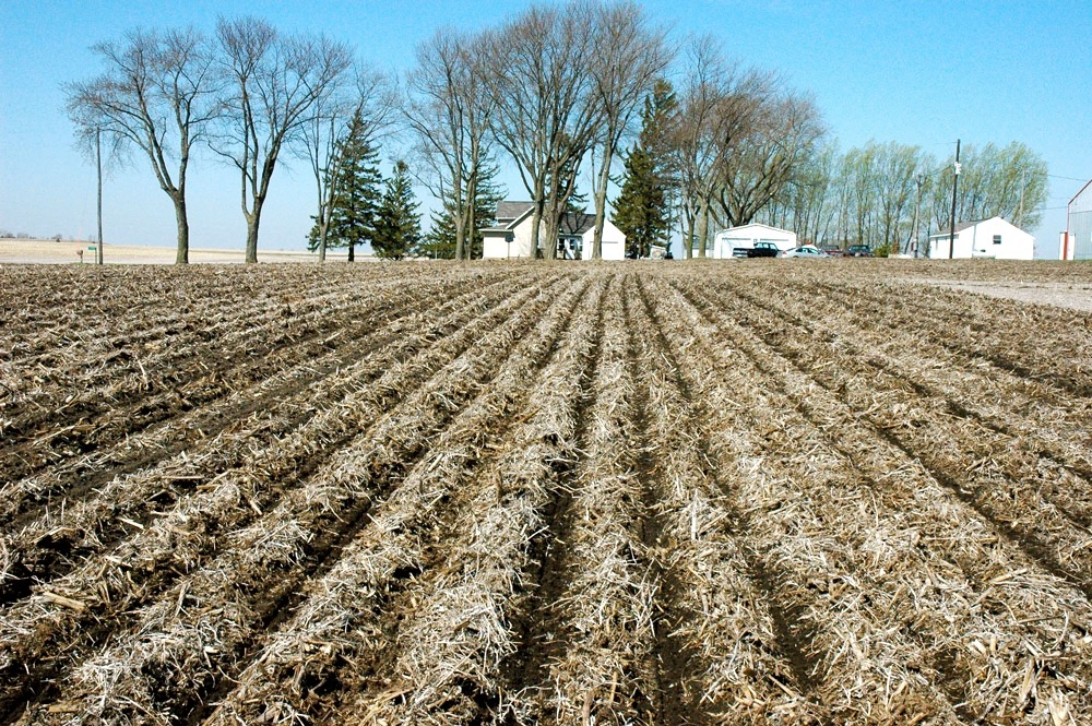 Preliminary research suggests strip tillage is an option for exposing enough soil to get it warm enough to plant corn in Western Canada.