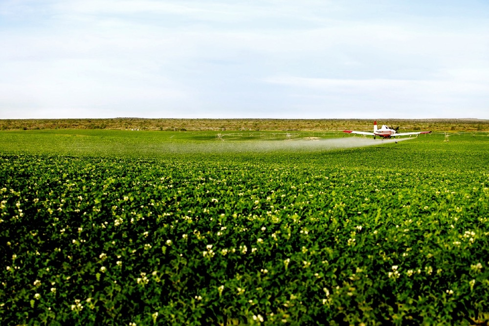 crop spraying potatoes