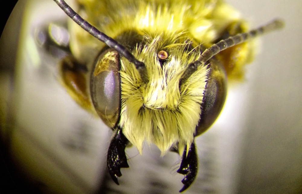 General Mills is offering free flower seed to conservation-minded farmers who are interested in promoting habitat for predators and pollinators such as the native leafcutter bee.