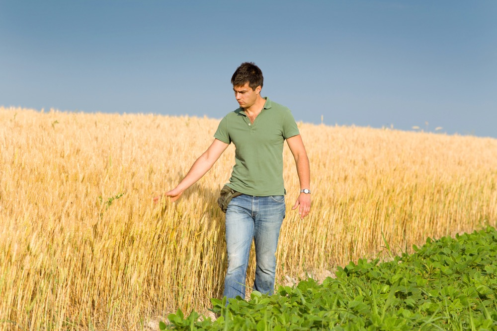 young farmer touching ripe golden wheat in field