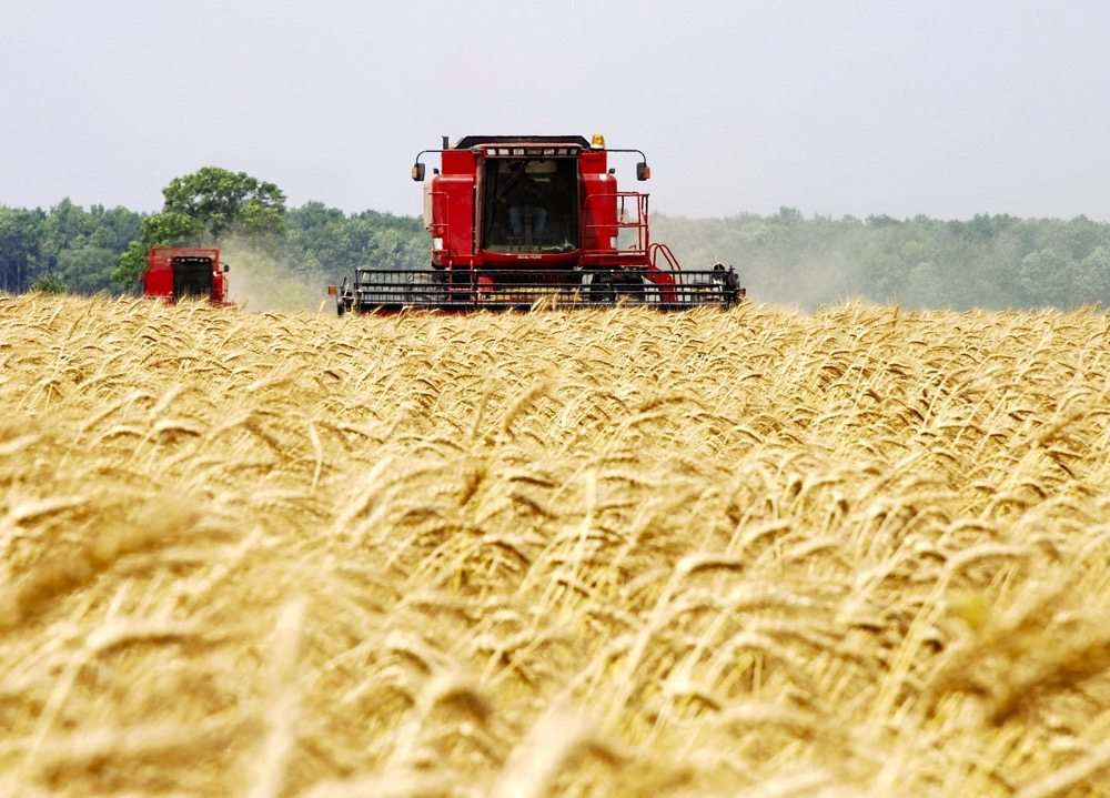 Most of the varieties covered by PBR are from the public sector, and most are cereal varieties.