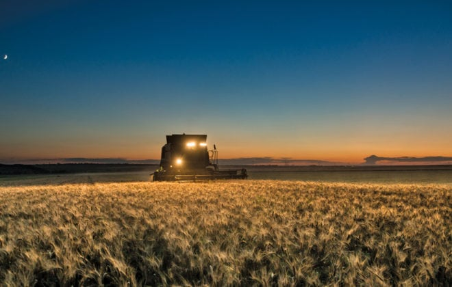 combine harvesting at night