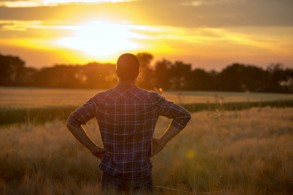 Young farmer standing in wheat field with hands on hips and looking forward at sunset