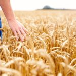 As a producer, are you getting enough feedback from the consumers of your grains? If not, you need to ask why.