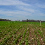 Pest Patrol: Planning for cover crops