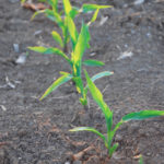 The growing body of science for corn growers