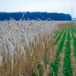 Re-setting the mind-set on cover crops