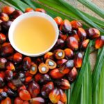 File photo of fresh palm fruits and palm oil. (Slpu9945/iStock/Getty Images)