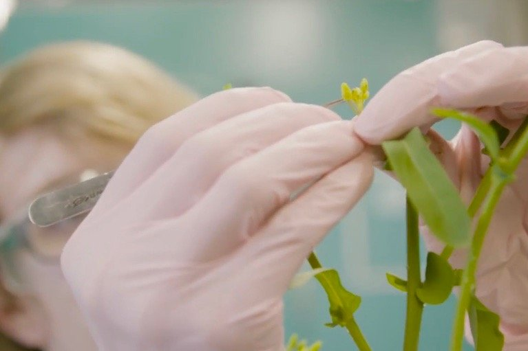 Corteva Agriscience, which spun off from the merged Dow and DuPont in 2019, got its canola seed breeding lab and research station in Saskatoon from the Dow AgroSciences end of the merger. (Video screengrab from Corteva.ca)