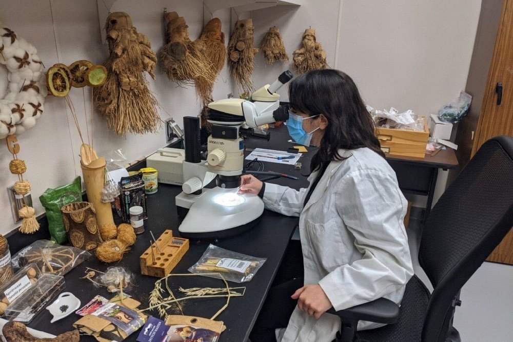 A botanist with APHIS' National Identification Services (NIS) examines the contents of an unsolicited package of seeds under a microscope on July 30, 2020. (Photo courtesy USDA/APHIS)