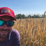 Southern Alberta seed grower Greg Stamp in a field of KWS Daniello, a hybrid fall rye variety noted for its high resistance to ergot.