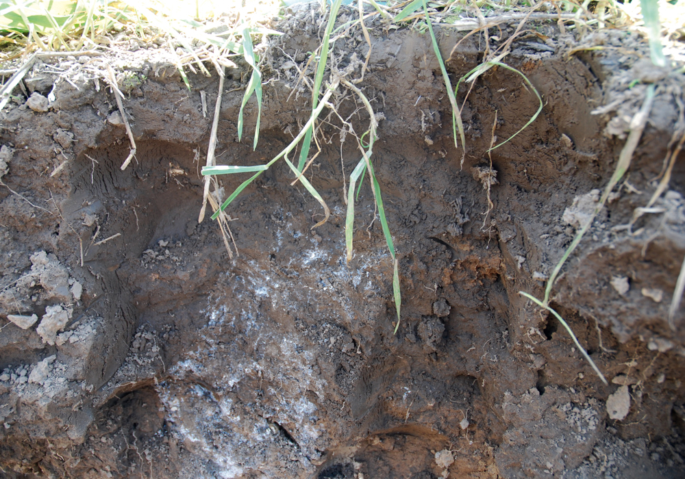 What's happening below the soil has a greater impact on crop performance and yield.