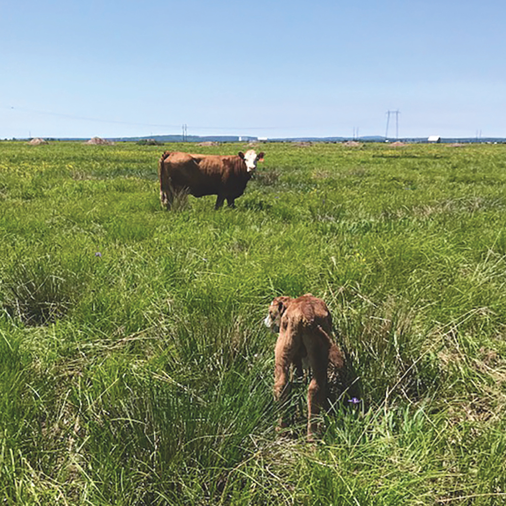The project aims to shift to more legume and good-quality forage grass species rather than some of the non-essential plants or weeds now in the pasture.