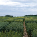 The seed sector, particularly cereals, needs reinvestment in breeding, hence the drive to establish Seeds Canada.