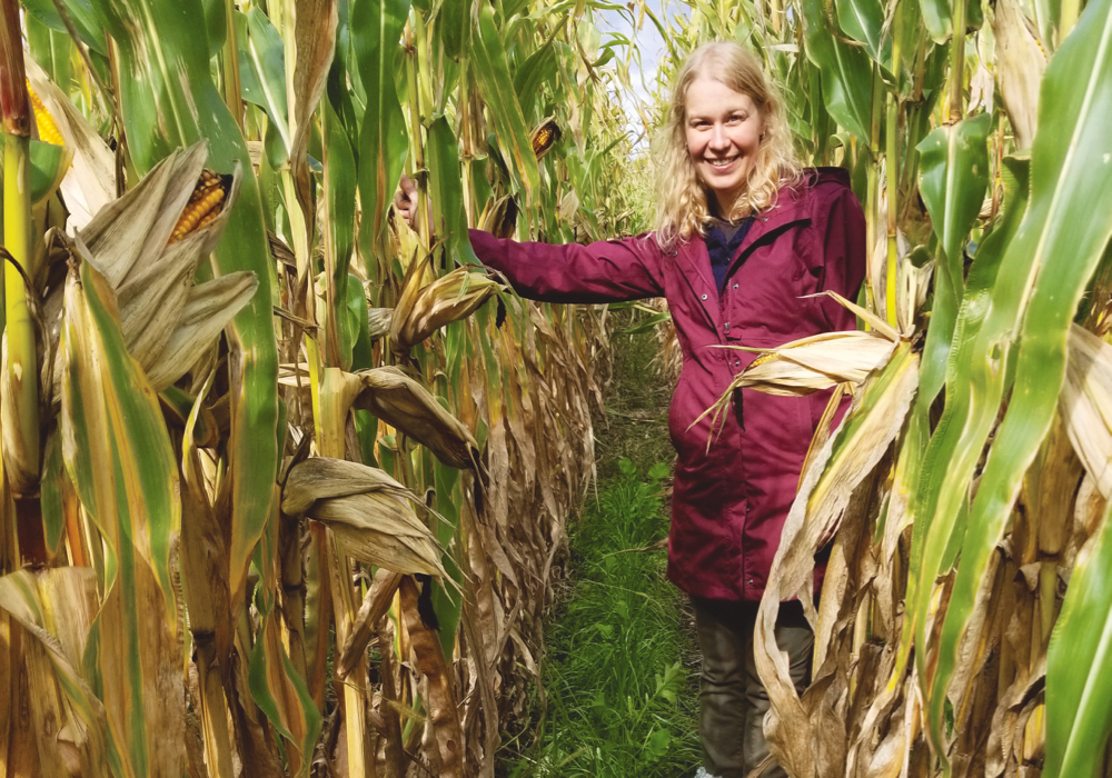 Yvonne Lawley checking cover crops intercropped with corn at the University of Manitoba Carman Research Farm in September 2019. Lawley and colleague Emma McGeough hope to get funding for a Prairie-wide project on intercropping.