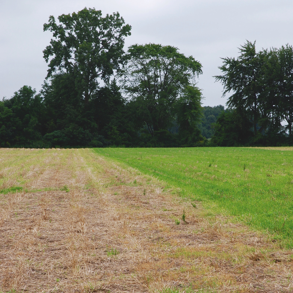 A field on the Van Arkel farm being readied for next year's Living Labs (AAFC) trials.
