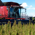 Hemp 101 for growers