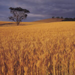 Canadian investments in Australia – A focus on agriculture